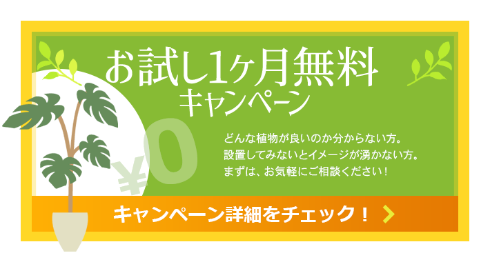 お試し1ヶ月無料キャンペーン|観葉植物レンタル|東京・千葉・神奈川
